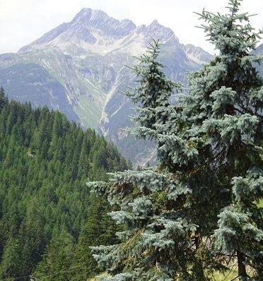 Bergtour ebike mieten mountainbike fahren